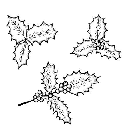holly leaves set sketch