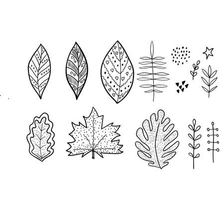 Leaf set sketches illustraion
