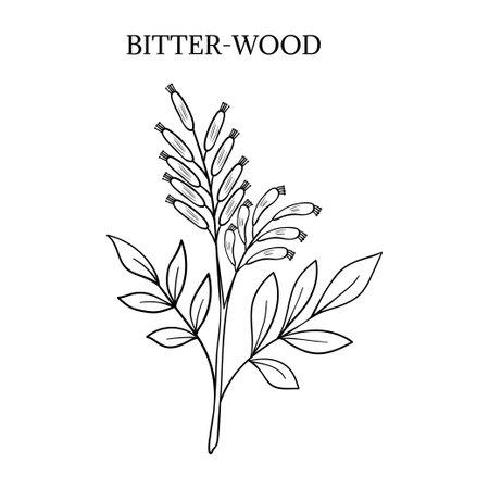 bitter herbs 일러스트