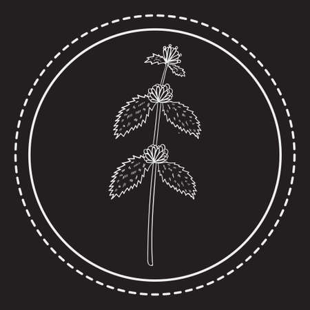 bitter herbs in a circle  illustration