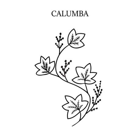 bitter herbs  illustration