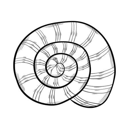 seashells, starfish set artbo illustration 일러스트