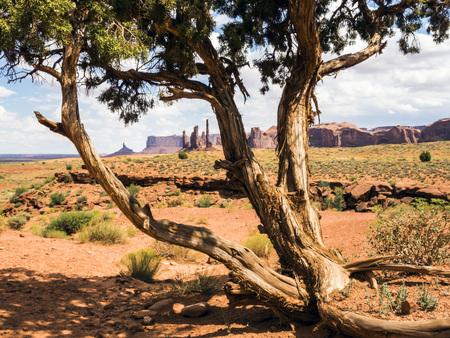 quite: Totem Pole, old tree, Monument Valley - Arizona, AZ, USA