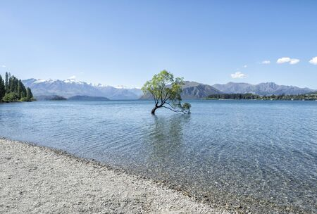 Wanaka Tree, South Island, New Zealand, NZ