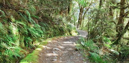 Key Summit, Routeburn Track, Milford National Park, New Zealand, South Island, NZ
