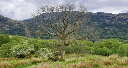 West Hiland Way Track, landscape between Loch Lomond and Bridge of Orchy, long distance hike - Scotland, UK 版權商用圖片 - 132093825