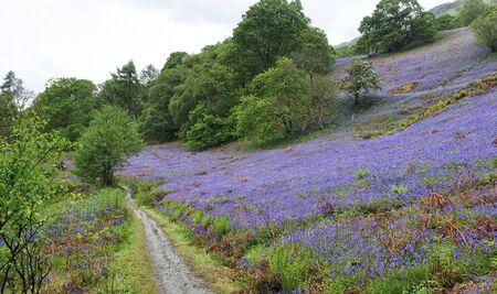 Forest along Loch Lomond West Hiland Way Track, long distance hike - Scotland, UK Stok Fotoğraf