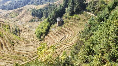 The scenery wavy Longsheng Rice Terraces after harvest - North Guillin, Guangxi Province, China 版權商用圖片