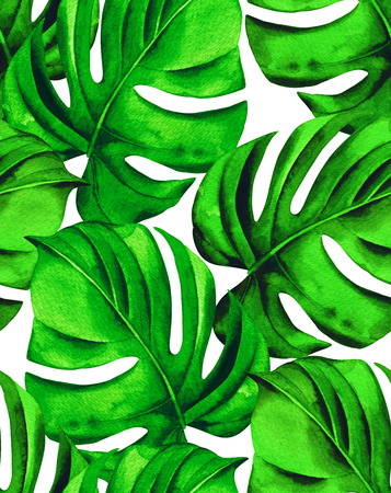 allover: seamless monstera leaves pattern. tropical palm leaves in allover composition. design for fashion or interior. beautiful botanical drawing on white background. Stock Photo