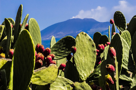 strange mountain: The prickly pears from Paterno and Mount Etna in the background characterize this wonderful shot That encompasses Sicily Stock Photo
