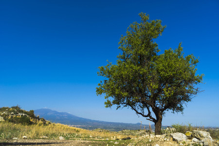 strange mountain: In this amazing picture a tree and the Etna on the background