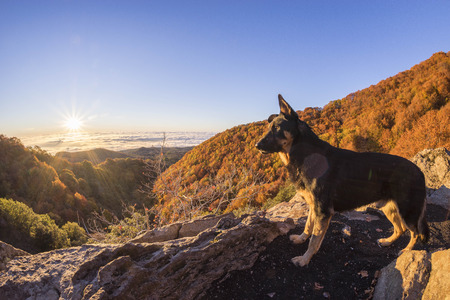touring: A dog looking at the first sun on the Etna mount. The beautiful colors of the sunrise and warm colored woods in autumn.