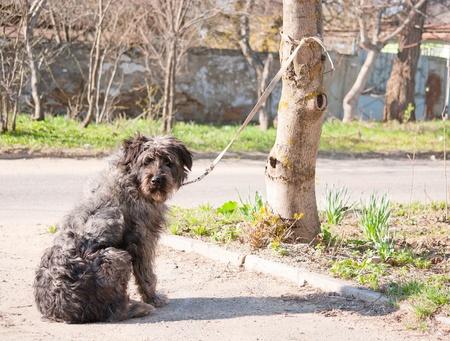 Hond wacht op eigenaar