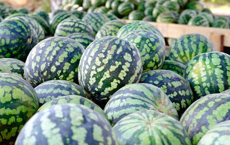 Lots of ripe watermelon is a large pile