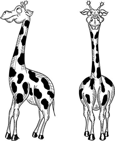 fun giraffe on a white background, vector