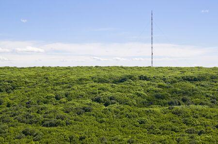 Een hoge mast verheft zich boven de kronen van bomen, van bovenaf gezien Stockfoto