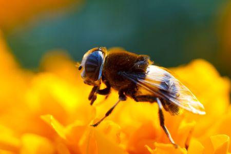 Eine Biene sammelt Honig