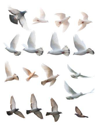 pigeons: posture de nombreux vols de pigeon Banque d'images