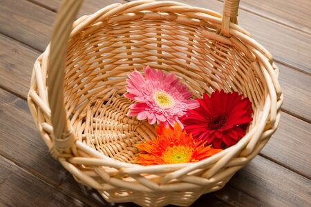 coloful: the coloful African daisy in a basket