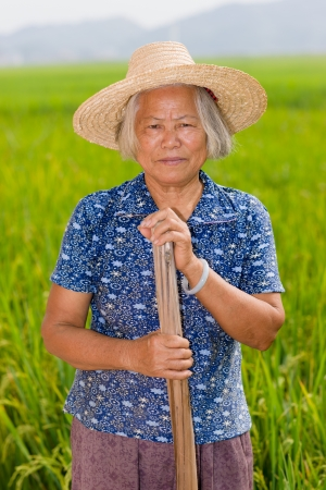 cropland: Chinese senior female peasant in the rice filed