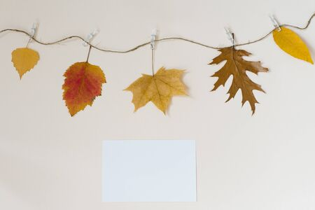 Autumn fallen leaves hang on a rope with clothespins on a light beige background. The concept of autumn discounts. Copy location
