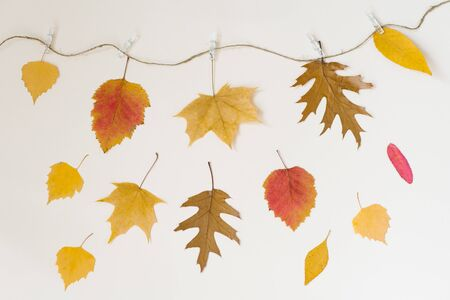 Autumn fallen leaves hang on a rope with clothespins on a light beige background and falling leaves. The concept of autumn discounts. Price fall