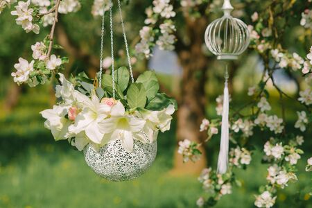 White beautiful flowers in a silver round vase hang on a blooming Apple tree. Wedding decor Фото со стока