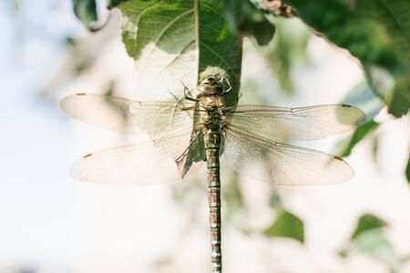 Close up detail of dragonfly. dragonfly image is wild with blur background