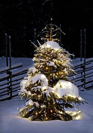sweden: Christmas tree at night