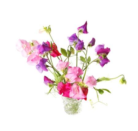 Zoete erwt, Lathyrus odoratus, bloemen in een kristal wase. Stockfoto