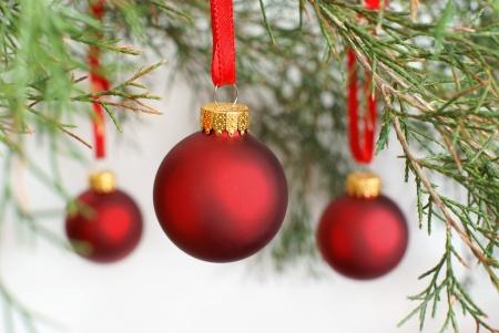 Christmas baubles on a Cedar tree branch