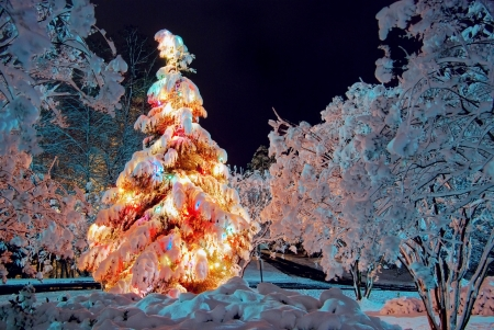 tress: Snow covered Christmas tree at night, with colorful lights