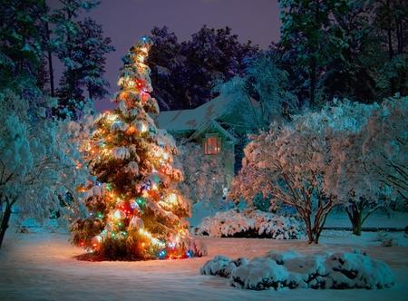 illuminated: Publik Christmas tree on public property