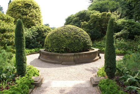 topiary: Yew topiary tree Stock Photo