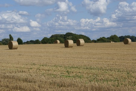 rural landscape: Rural landscape with straw bales in the countryside Stock Photo