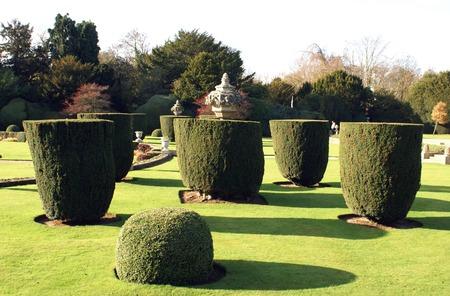 topiary: Yew topiary trees