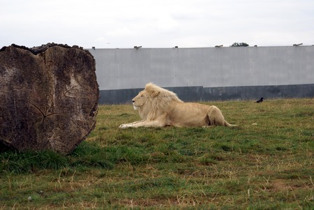 places of interest: Lion, England