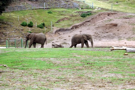 place of interest: elephants