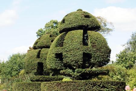 topiary: topiary trees Stock Photo