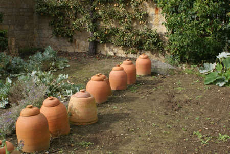 forcing: Rhubarb terracotta forcing pots jars in a garden