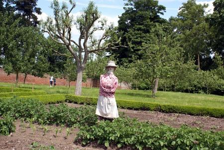 scarecrow: scarecrow in a vegetable garden