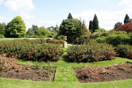 fuschias: garden Stock Photo