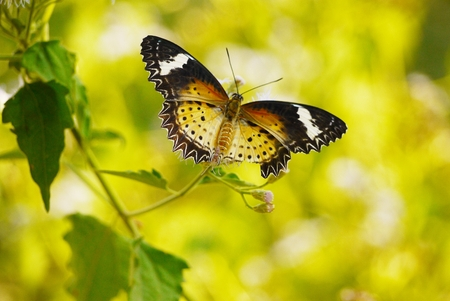 beauty butterfly on  Yellow background photo