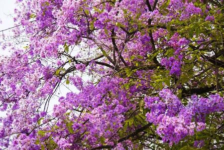 purple flowers: Purple flowers on a branch Stock Photo