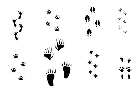caricaturas de animales: Senderos de los animales Vectores