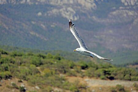 Beautiful seagull against the sky
