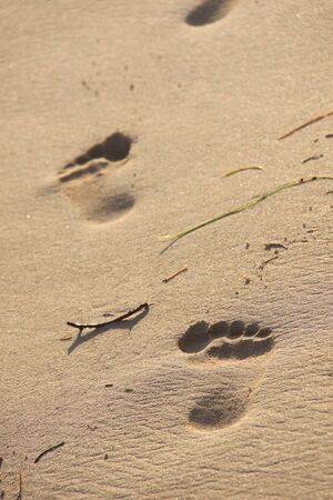 Nice footprints against the warm sand on the coast Stock Photo