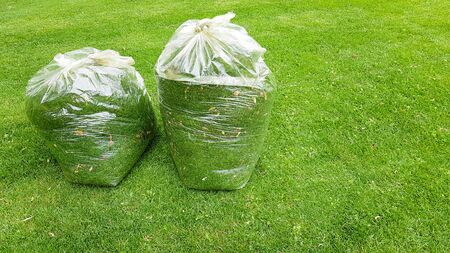 fresh grass clippings in garbage bag on green grass.
