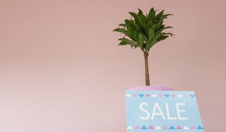sign on a shelf with the inscription discount on a background of a pale pink wall with a green plant in a womens clothing store. selling nameplates. Discount at the boutique of the shopping center
