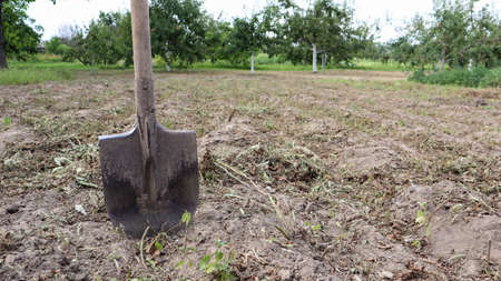 A sharp old farmer's shovel sticks out of the ground in cultivated agricultural fields. Garden village. hard manual work.